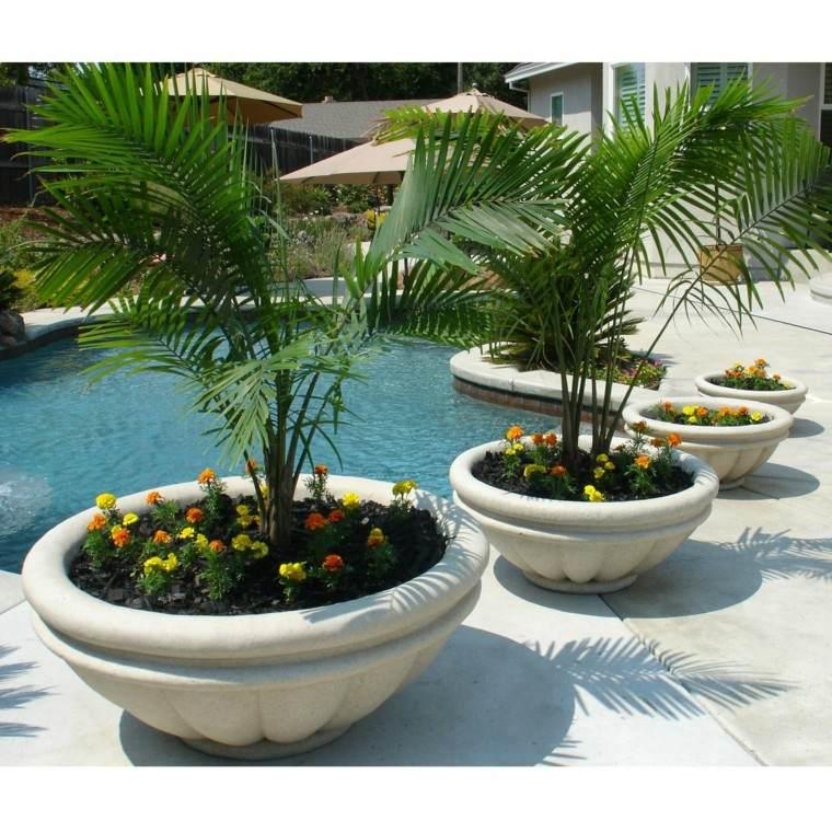 palmeras piscina exterior flores sombrillas