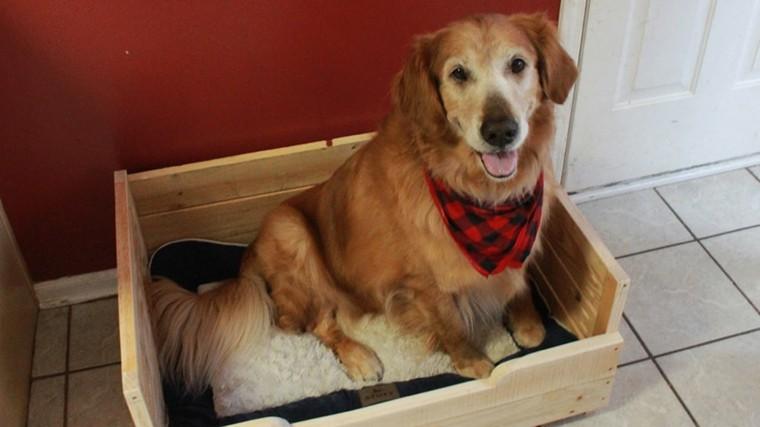 perro feliz pañuelo cama rojo
