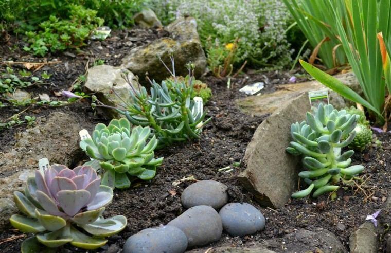 plantas diseño agradable intenso pequeñas