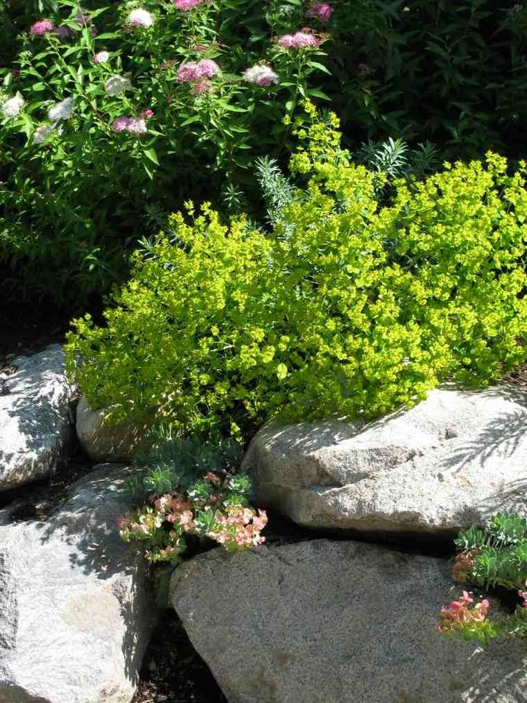 plantas verdes animado jardineria idea
