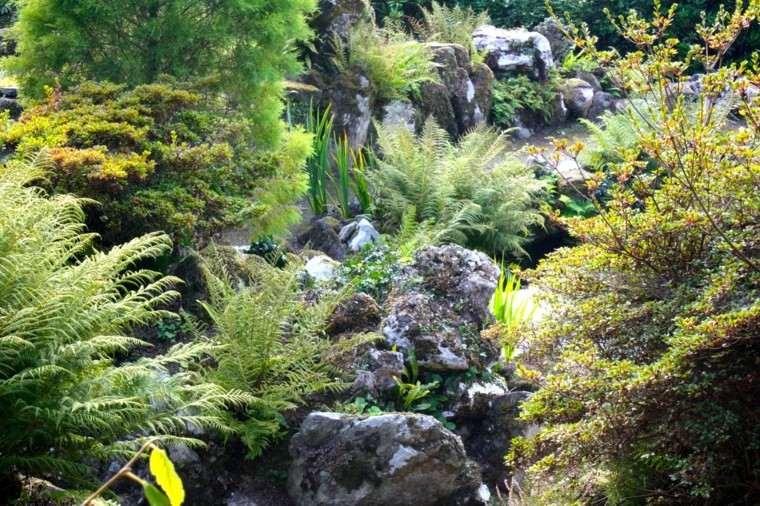 roca jardines helecho humedad fresco