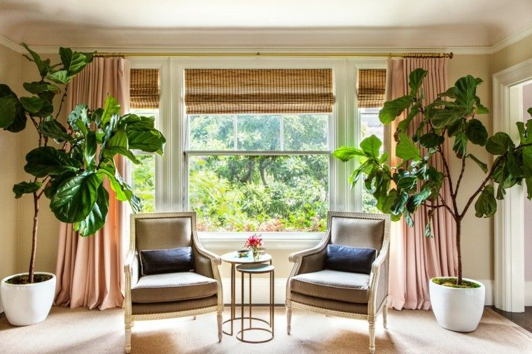 salon cojines altas plantas mesa