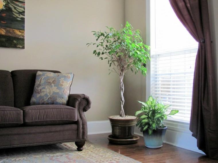 sofa salon elegante marron luz