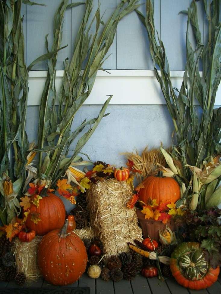 adornos natural calabazas plantas