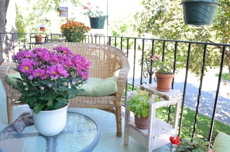 balcones terrazas margaritas crisantemos rosas