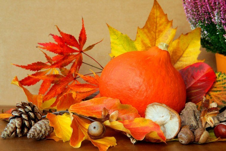calabaza color naranja hojas piñas