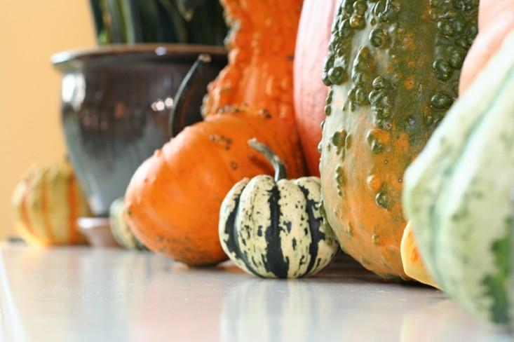 calabazas decorativas diferentes colores ceerca