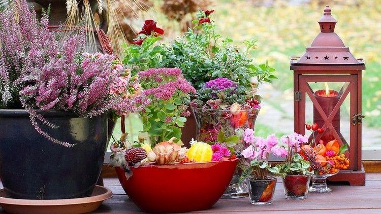cubos cuencos boles plantas flores