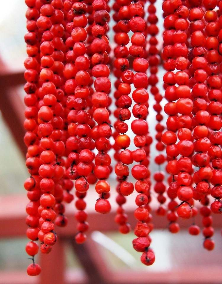 garlands red curtains hanging berries