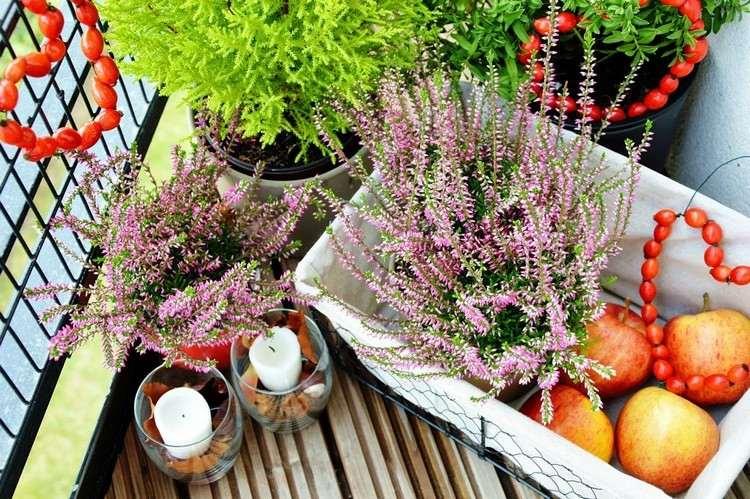 pots apples flowers colors candles