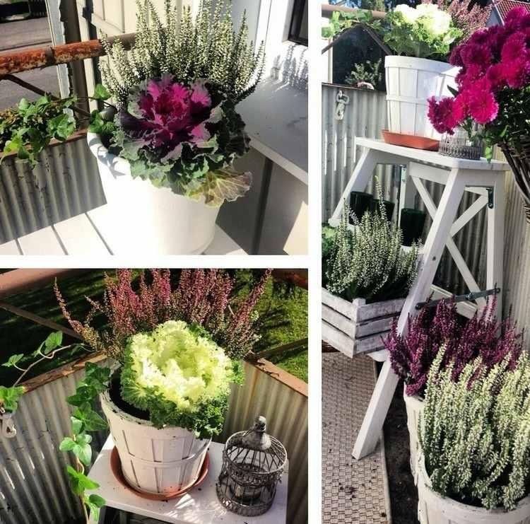 flower pots decorative cabbages