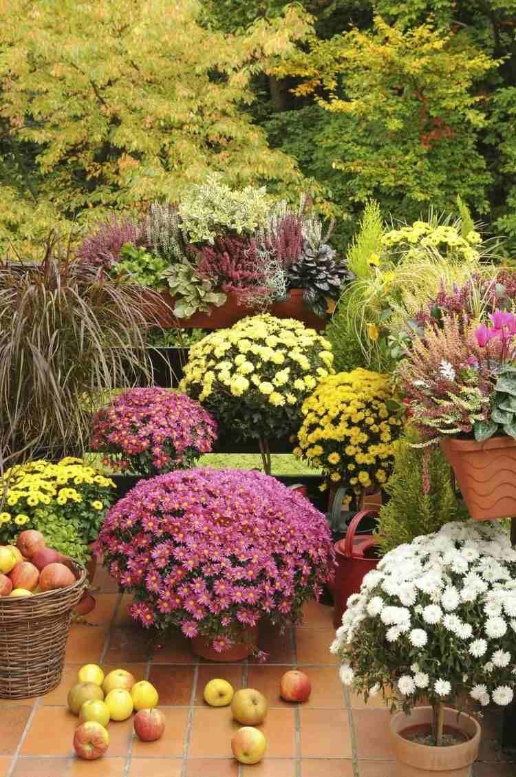 plantas flores decorativas crisantemos otoño