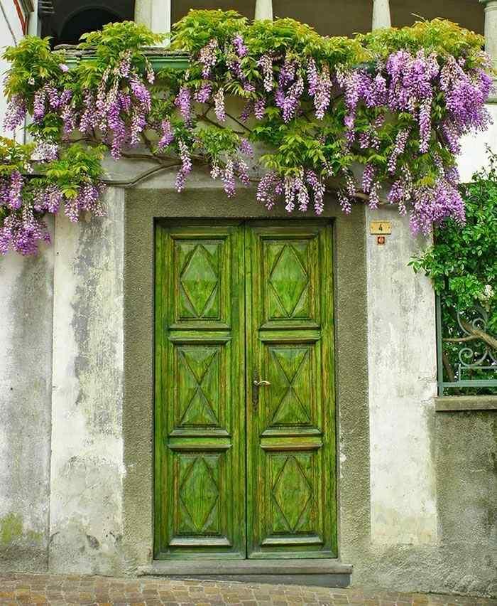 puerta entrada verde flores lilas