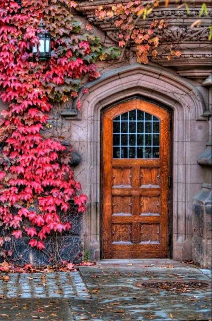 puerta madera planta hojas rojas