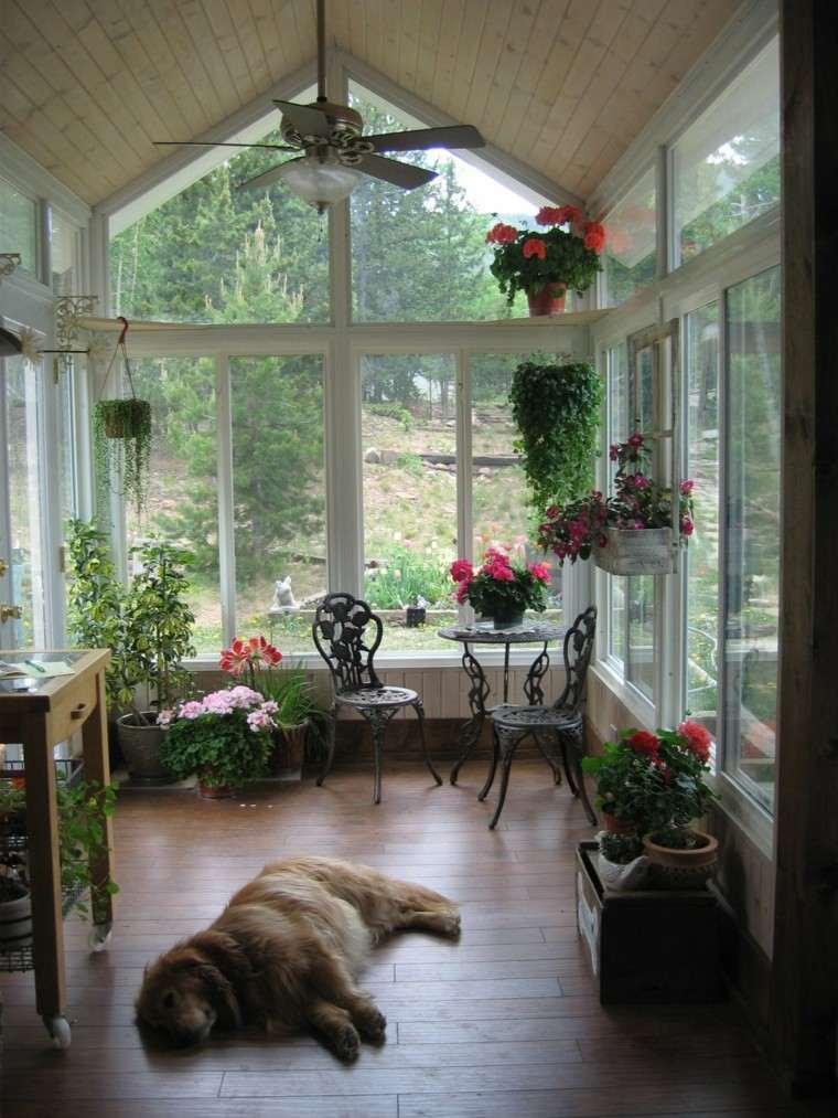 invernaderos cubiertos perro dormido