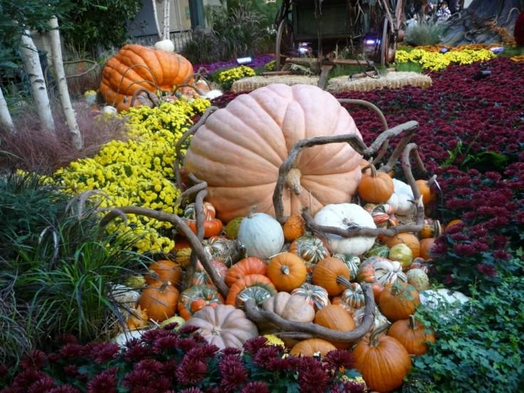 bonita decoración otoño jardin