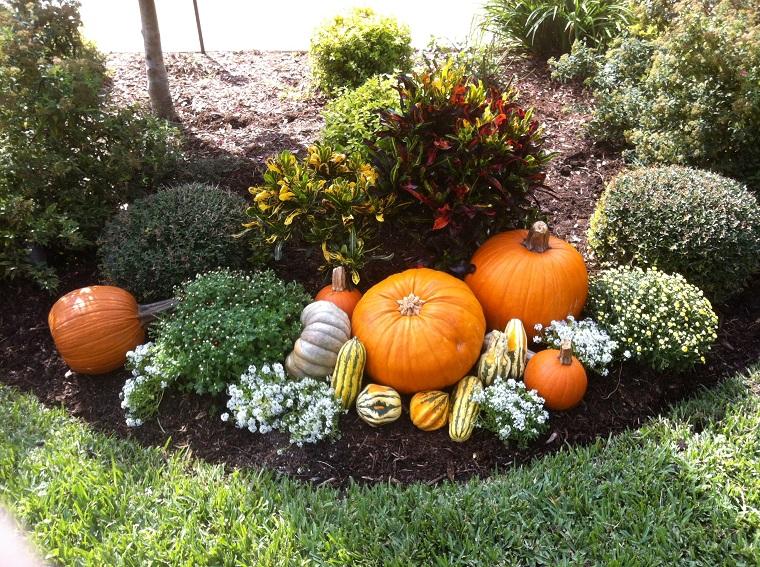 calabazas decora casa otono jardin plantas ideas
