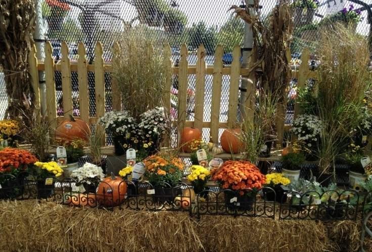 decoración jardin flores naranja
