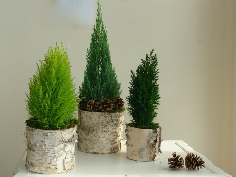 estupendos adornos abetos troncos naturales