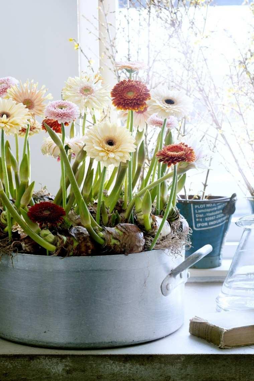 Fotos de flores de oto o para decorar la casa - Plantas en la pared ...