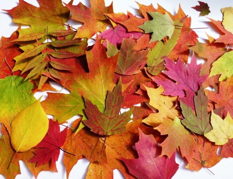 hojas secas muchos colores