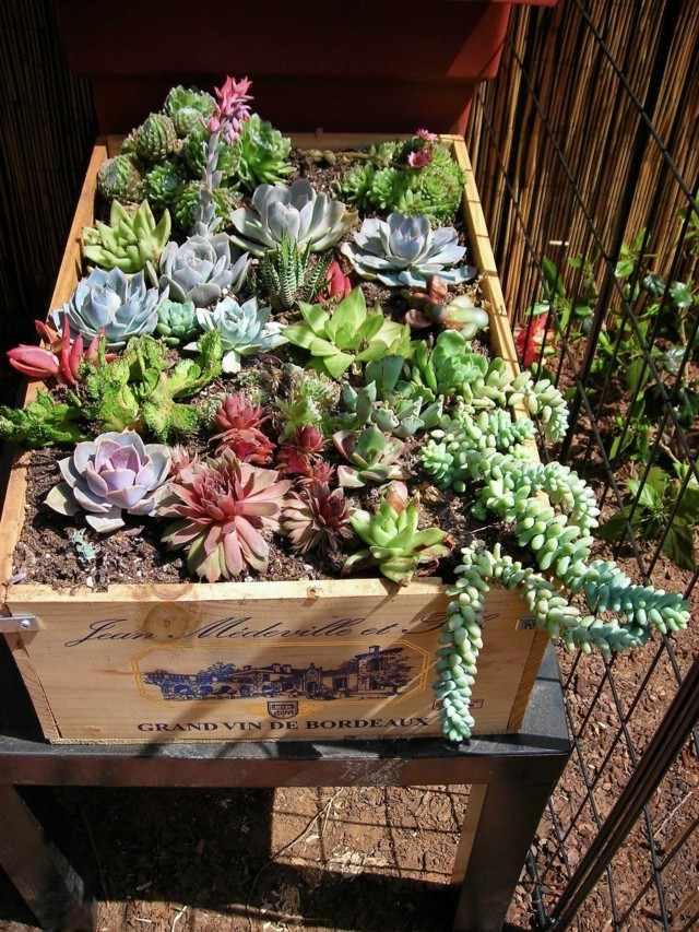 jardinera caja de madera vino plantas