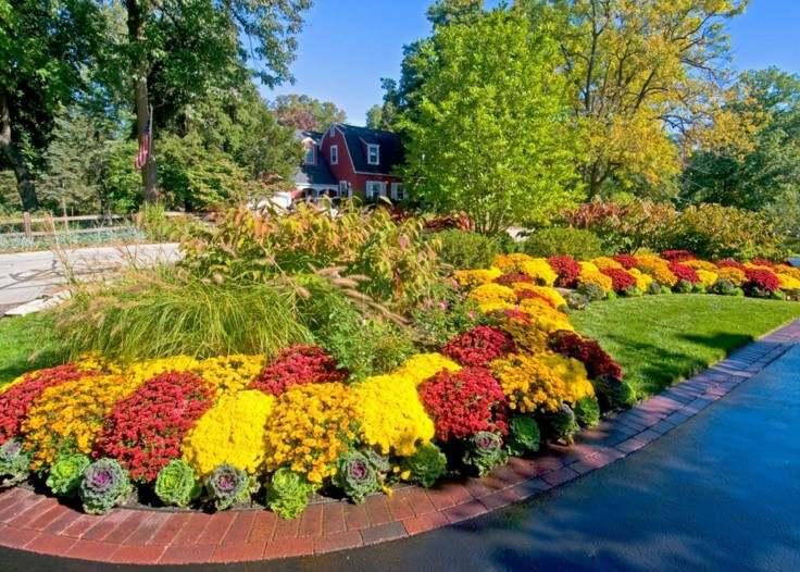paisaje otoñal flores jardin