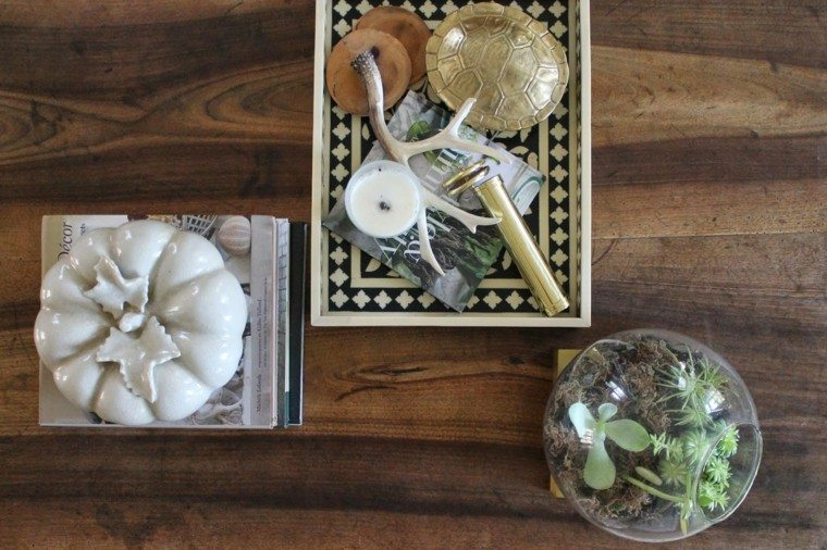 suculentas detalle creativo madera verde