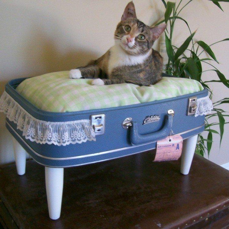 mascotas gato plantas ideas cama