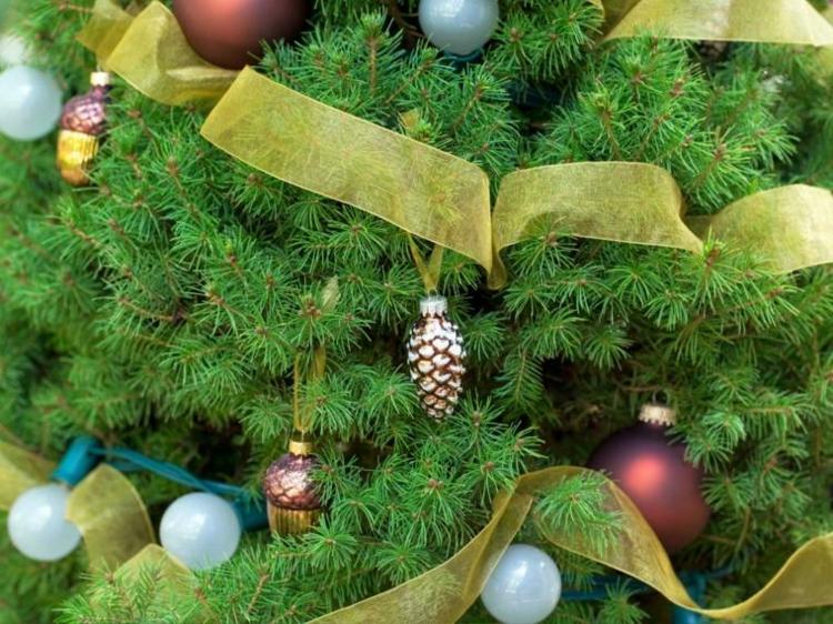 navidad creatividad plantas ideas bombillas colorido