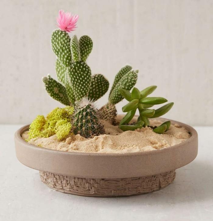 jardin cactus plato arena regalo ideas