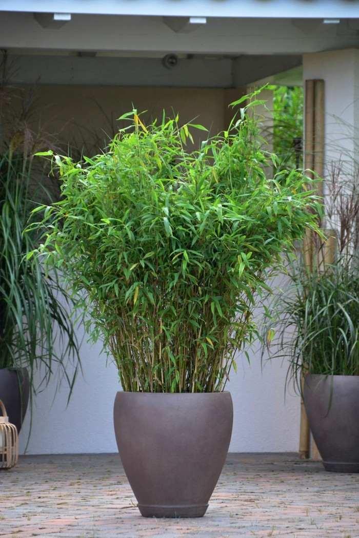 Adornos jardin e ideas originales en 100 im genes - Bambu planta exterior ...