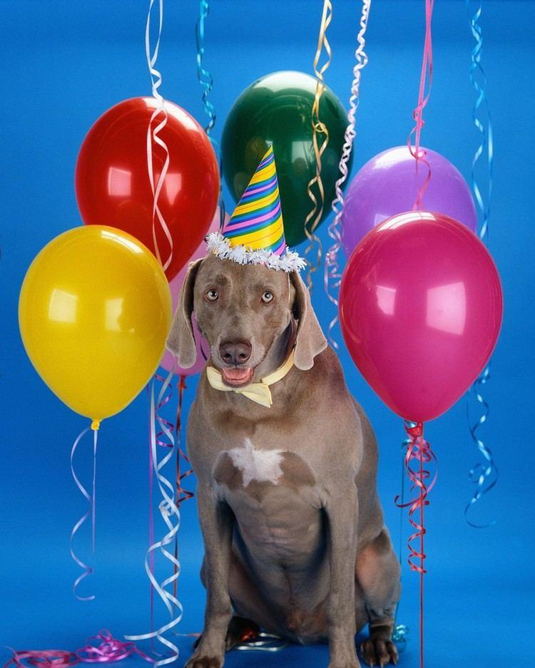 perro globos cumpleaños felíz colores