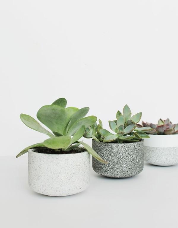 plantas secano suculentas deco regalo