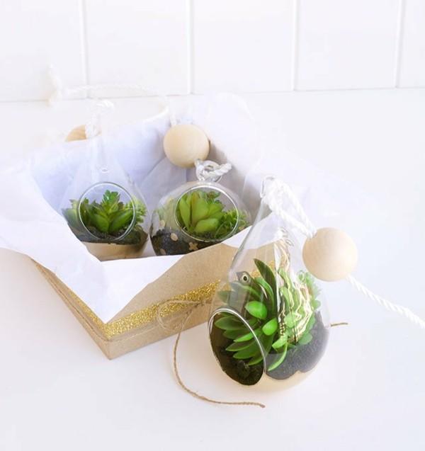 originales regalos para navidad plantas