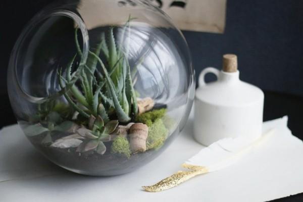 regalos para navidad planta aloe