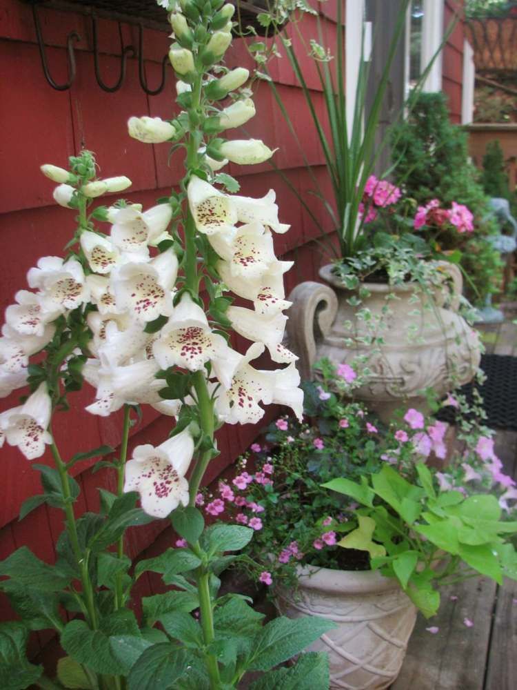 decoracion de terrazas y jardines envases especiales flores
