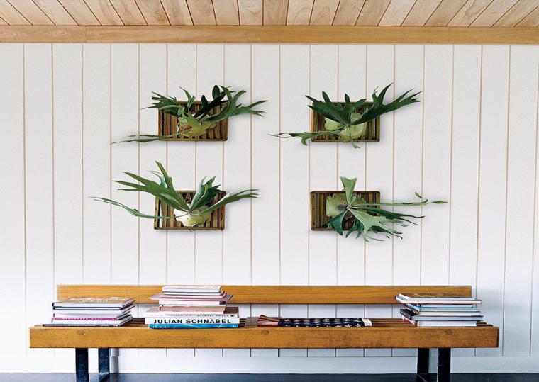 decorar con plantas macetas paredes