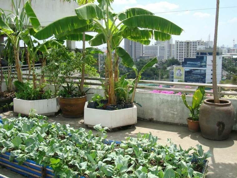 estupenda terraza plantas tropicales