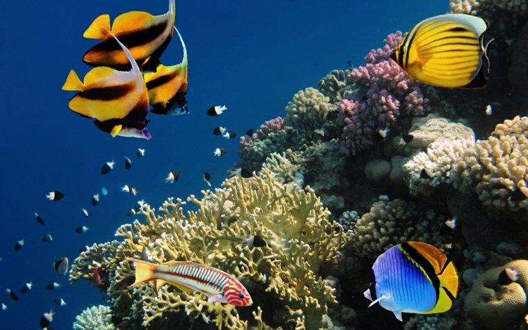 peces fondo marino corales definicion colores corales