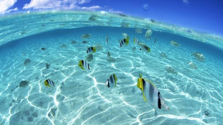 peces fondo marino corales definicion arena