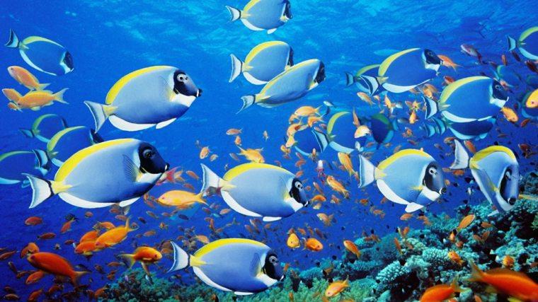peces fondo marino corales colorido