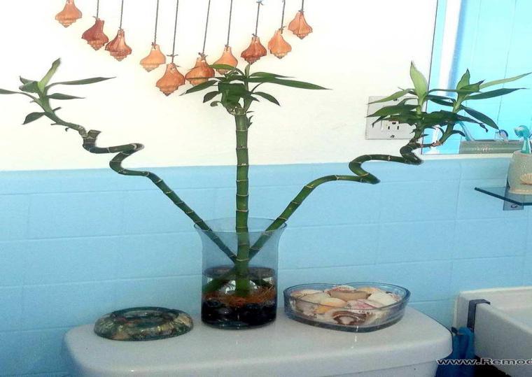 plantas decorativas estilo natural