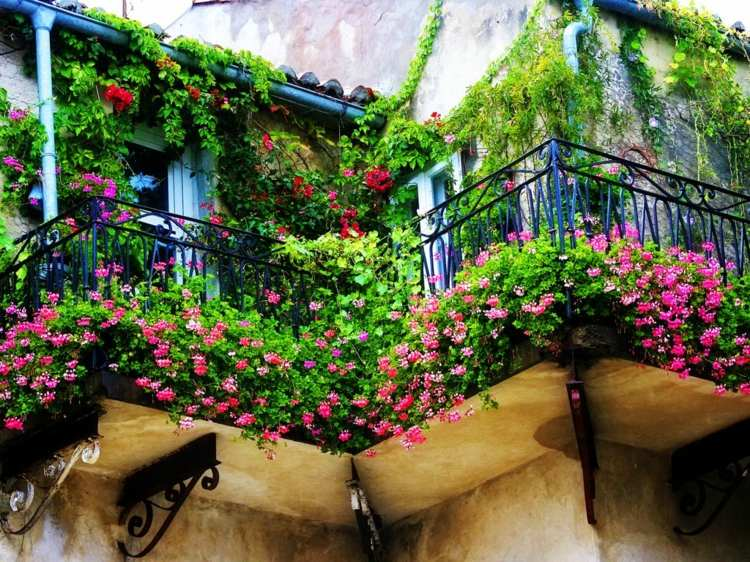 Plantas de exterior para terrazas y balcones 38 ideas for Balcony surrounds