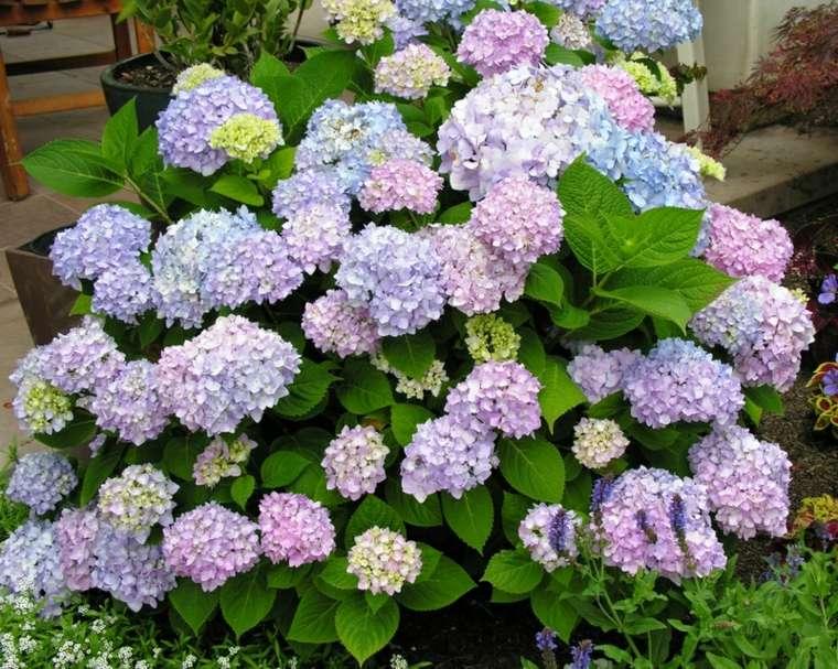 arbusto flores varios colores