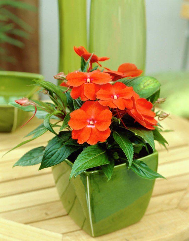 Plantas de exterior para terrazas y balcones 38 ideas - Plantas de interior bonitas ...