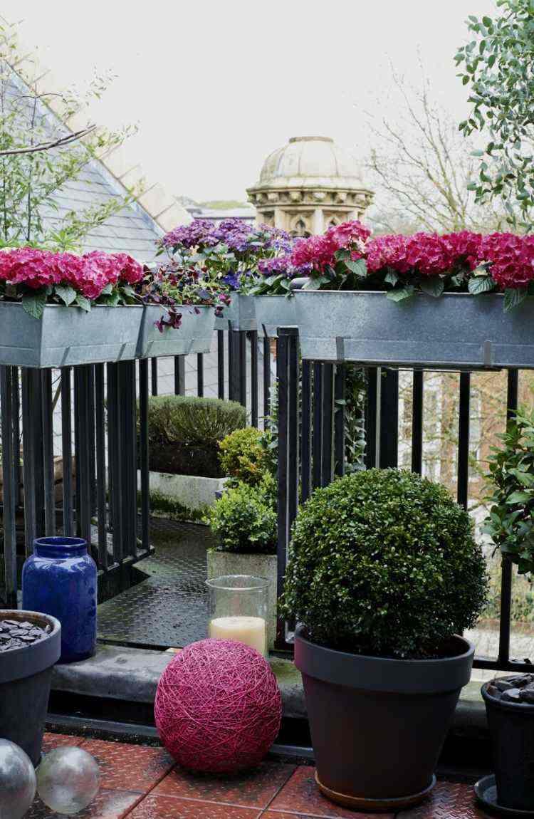 bonita terraza flores colores intensos