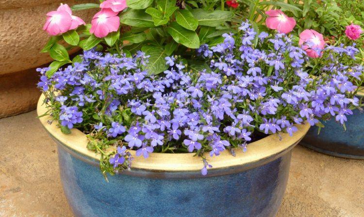 bonitas flores pequeñas color violeta
