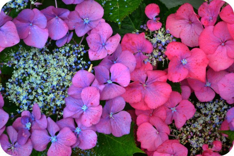 bonitas flores colores intensos vibrantes
