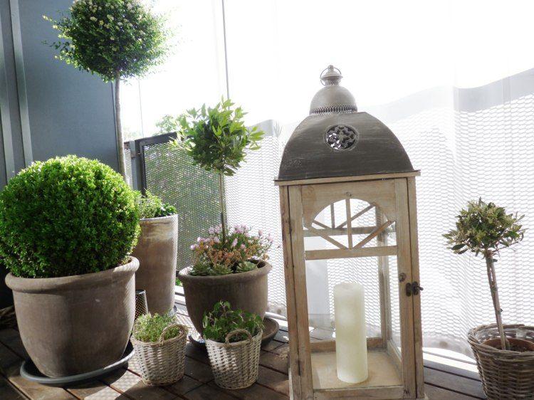 Plantas de exterior para terrazas y balcones 38 ideas for Arbustos para macetas exterior